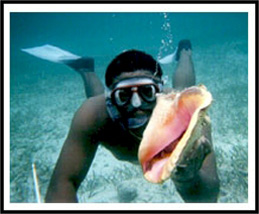 Dive for conch and lobster with Beach Cruiser on North Caicos Turks and Caicos Islands